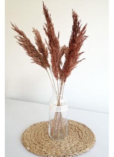 Kuru Çiçek Deposu Kuru Çiçek Pampas Küçük 7'li Demet 50 Cm (Turuncu) Oranj